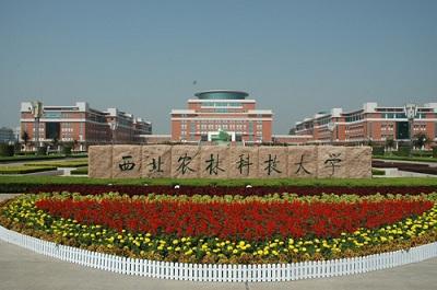 杨凌全过程审计项目技术支持